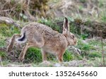 Stock photo hares running in a field 1352645660
