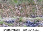 Stock photo hares running in a field 1352645663