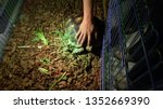 Stock photo close up sulcata tortoise a bunch of tortoise spurred tortoise sunbathe on ground with his 1352669390