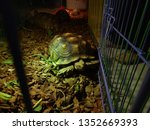 Stock photo close up sulcata tortoise a bunch of tortoise spurred tortoise sunbathe on ground with his 1352669393