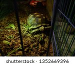 Stock photo close up sulcata tortoise a bunch of tortoise spurred tortoise sunbathe on ground with his 1352669396