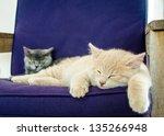 Stock photo cats kittens sleeping indoor 135266948