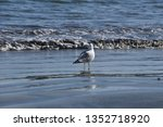 a seagull stands in the surf at ... | Shutterstock . vector #1352718920