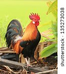beautiful rooster on nature... | Shutterstock . vector #135273038