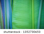 tropical leaf  large foliage ... | Shutterstock . vector #1352730653