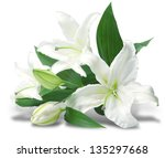 Bouquet Of White Lilies Is...