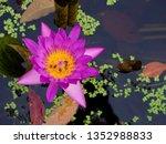 pink waterlily or lotus flower... | Shutterstock . vector #1352988833