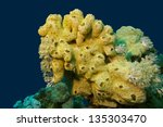 Coral Reef With Great Yellow...