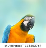 colorful blue parrot macaw | Shutterstock . vector #135303764
