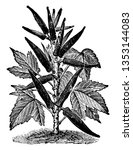 this is an okra plant. the...   Shutterstock .eps vector #1353144083