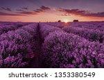 Lavender Fields. Beautiful...