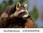 portrait of female common... | Shutterstock . vector #1353444956