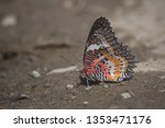 leopard lacewing outer side of... | Shutterstock . vector #1353471176