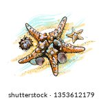 Starfish And Shells On A Summer ...
