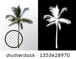 Isolated Coconut Palm Tree On...