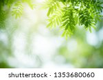 closeup nature view of green... | Shutterstock . vector #1353680060