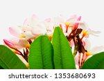 plumeria pink plumeria... | Shutterstock . vector #1353680693