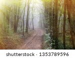 the road leads to the misty... | Shutterstock . vector #1353789596