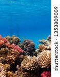 coral reef in egypt as nice...   Shutterstock . vector #1353809009
