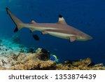 blacktip reef shark ...   Shutterstock . vector #1353874439