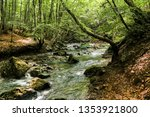 the banks along the forest... | Shutterstock . vector #1353921800