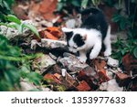 Stock photo young girl holding three beautiful kittens outdoor adoption concept homeless kittens the problem 1353977633