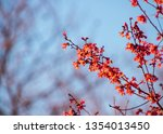 branch of new cherry blossoms... | Shutterstock . vector #1354013450