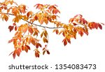 Stock photo clipping path falling maple for artwork design 1354083473