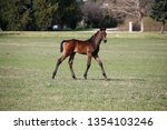 few weeks old colt live on a...   Shutterstock . vector #1354103246