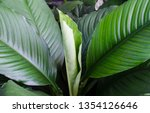 beautiful leaves background. | Shutterstock . vector #1354126646