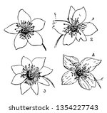 picture is showing buttercup... | Shutterstock .eps vector #1354227743