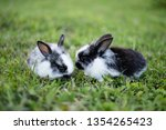 two black and white rabbits on... | Shutterstock . vector #1354265423