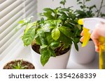 flowers in white pots on the... | Shutterstock . vector #1354268339