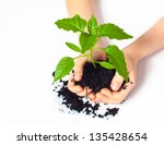 small plant cupped in child's... | Shutterstock . vector #135428654