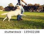 A Mixed Labrador Female Dog...