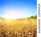 A Wheat Field  Fresh Crop Of...