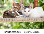 Two Beautiful Kittens Sat On A...