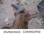 portrait of adorable domestic...   Shutterstock . vector #1354402943