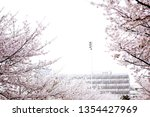 sakura season or hanami.... | Shutterstock . vector #1354427969