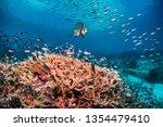 Underwater Wide Angle Scene...