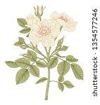 sketch floral botany collection.... | Shutterstock .eps vector #1354577246