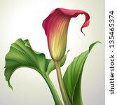 Creative Illustration Of Calla...