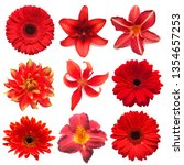 collection red flowers head of... | Shutterstock . vector #1354657253