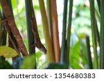 tropical reptile in costa rica | Shutterstock . vector #1354680383