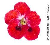 One Geranium Pelargonium Head...