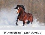 brown draft horse walk through... | Shutterstock . vector #1354809533