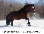 brown draft horse walk through... | Shutterstock . vector #1354809950