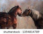 portrait of two brown draft... | Shutterstock . vector #1354814789