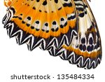 Macro Close Up Of Butterfly Wing