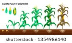 corn plant growth  farm and... | Shutterstock .eps vector #1354986140